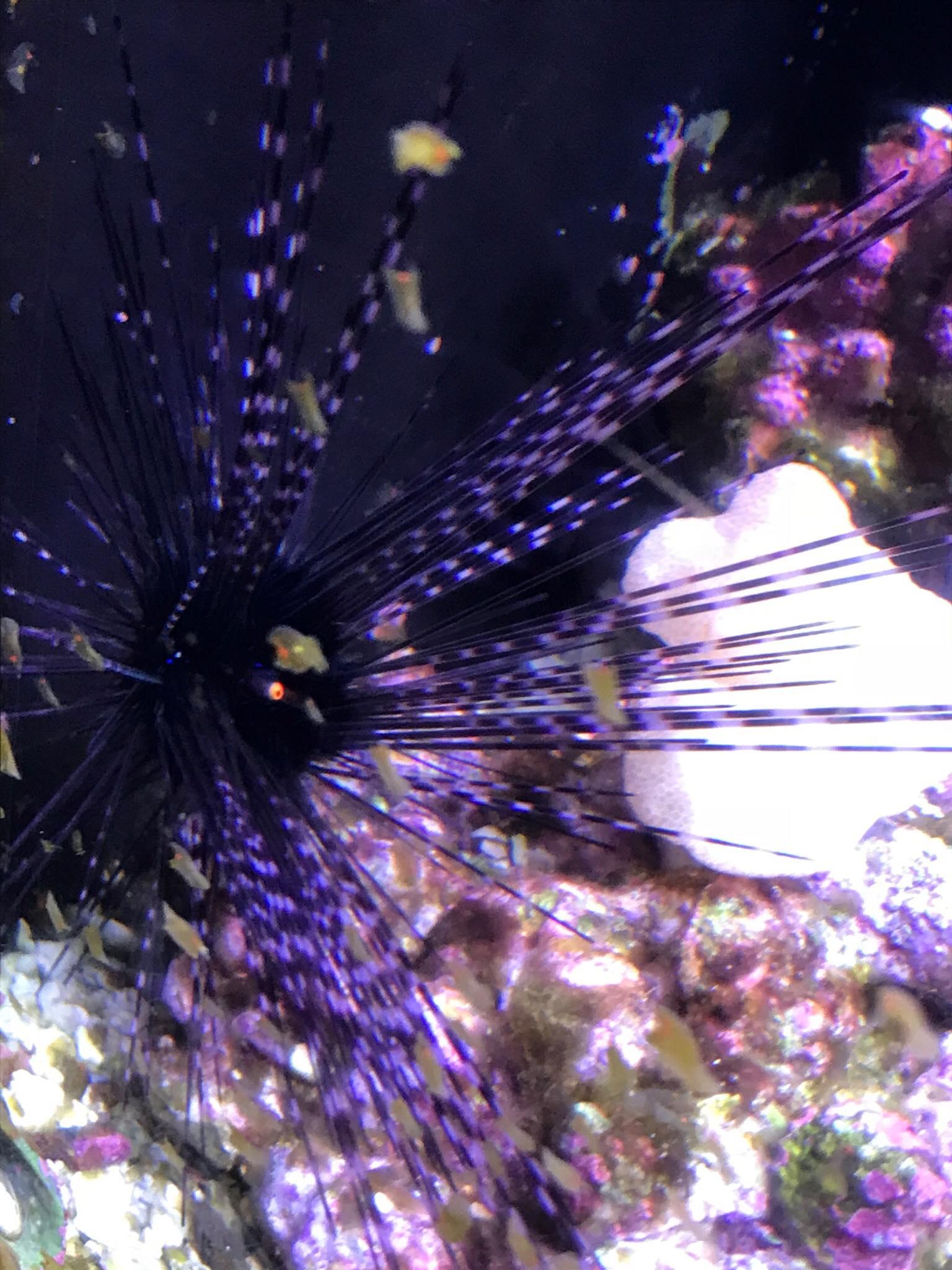 8) sea urchin